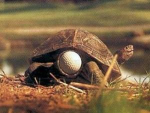Tartaruga non particolarmente intelligente