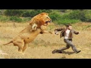 Concerto per leoni